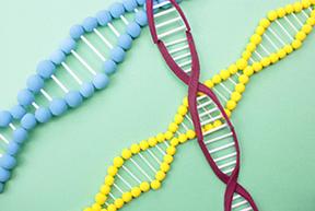 糖尿病と遺伝子の関係