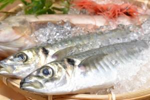 糖尿病改善に良い魚