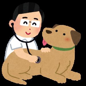 犬の糖尿病予防