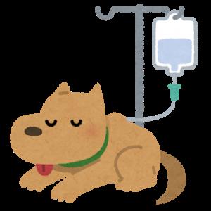 犬・猫の透析治療の様子