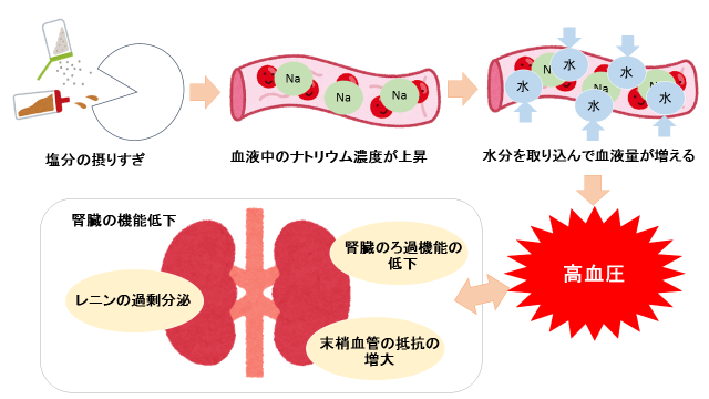 高血圧と腎機能の関係