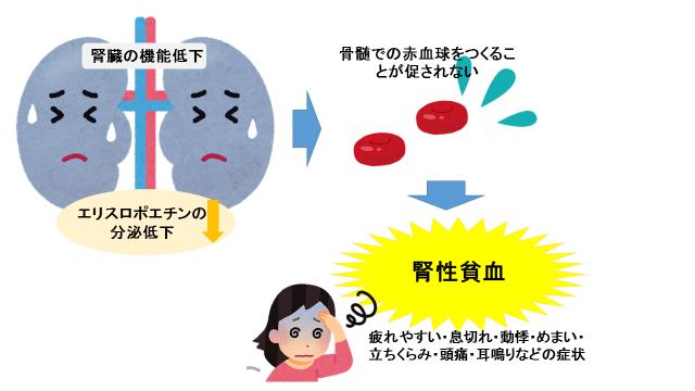 腎性貧血の症状